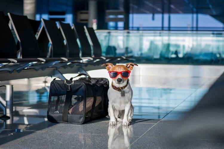 dog-travel-bag